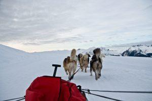 Drømmeferie i Norge – hundekjøring!- bild