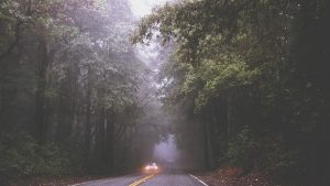 vei i skogen - bild
